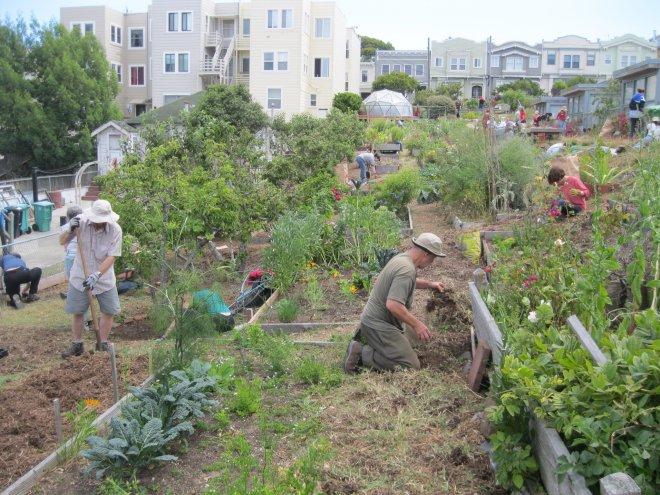 ACG Community Gardeners at Work