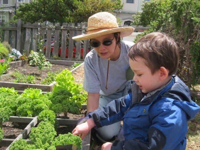 Garden Discovery